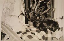 VINTAGE NEW YEARS 1950 GARNETT & SISSIE DADDY'S DOG PEKINGESE PET LOVER PHOTO