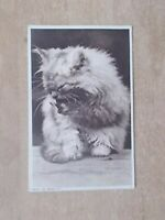 VINTAGE POSTCARD - WASH AND BRUSH UP - CAT KITTEN GROOMING ITSELF