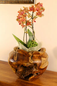 Planter Teak Wood Root Wood Teakwood Flowerpot Flowers Pot Planter Round