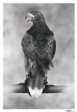 Limited edition artists print- Harris Hawk