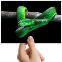 "Green Viper Snake Reptile - Small Photograph 6"" x 4"" Art Print Photo Gift #16184"