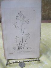 Vintage Print,SILVERY HAIR GRASS,British Flowering Plants,W.Baxter,1840