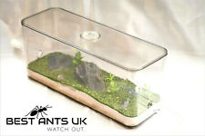 Medium Live Ant Meadow Outworld Arena Formicarium Farm Ant Housing Ant Colony