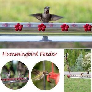 Best Hummingbird Feeder With Hole Birds Feeding Transparent Pipe Outdoor 50cm