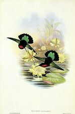 "1990 Vintage HUMMINGBIRD #82 ""PURPLE BREASTED CARIB"" GOULD COLOR Art Lithograph"