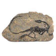 1pc Tyrannosaurus Rex Dinosaurier Fossil Jurassic Kreidezeit 130 Millionen Jahre