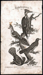 WOODPECKER - CRESTED JAY - WHYNECK 1810 Oliver Goldsmith Birds ANTIQUE ENGRAVING