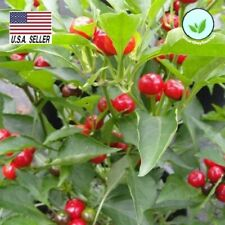 CHERRY PEPPER -50 SEEDS - HOT  LARGE RED CONTINUOUS FRUITING VEGETABLES USA!
