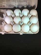 12 Duck Fertile Hatching Eggs Khaki Campbell, Cayuga, Ancona Mix