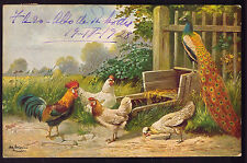 Pheasant + Chicken + Rooster in Farm. Old Postcard Artist signed