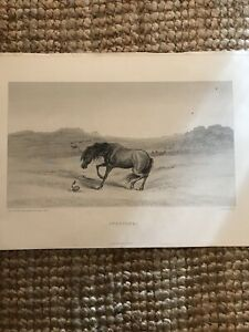 Antique 19th Century Etching - Startled Horse And Snake