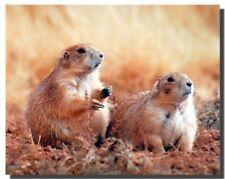 Cute Prairie Dogs Animal Wall Decor Art Print Poster (16x20)