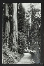 CALIFORNIA BIG TREES 20-In Sequoia Park Eureka Californa(Real Photo)