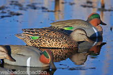 Avery Greenhead Gear Pro-Grade GW Green Wing Winged Teal Decoys 4 Drakes 2 Hens