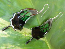 REAL Monarch Butterfly Wings Earring Jewelry 925 sterling hook Stunning RED,GREN