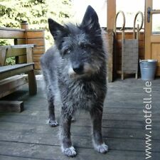NOTFELL SURVIVAL TICKET Lebens-Hilfe für Hunde in Not *.* Lúa