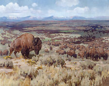 Rungius Carl The Days Of Bison Toward The Wyoming Range Canvas 16 x 20   #5564