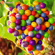 100 PCS Seeds Rainbow Growth Grape Bonsai Fruits Plants Rare Free Shipping 2019