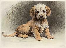 DANDIE DINMONT TERRIER DDT DOG FINE ART PRINT ENGRAVING - by Herbert Dicksee