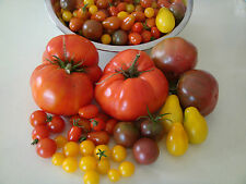 Mixed Tomato x30 Seeds Grape Cherry Currant Black Russian Brandywine Mix Seed