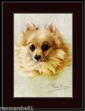 English Vintage Print White Pomeranian Puppy Dog Dogs Head Art Picture Poster
