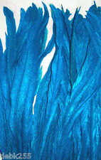 25 Turquoise Blue Rooster Coque Tail Feathers Dyed  12-14""