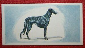 Scottish Deerhound  Original 1958 Vintage Colour Mini Card