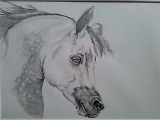 "Egyptian Arabian Horse Portrait Pencil Drawing Original Mounted 16"" x 20"""
