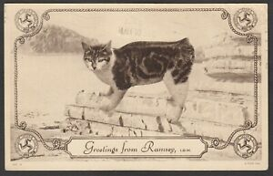 Postcard Isle of Man manx cat Greetings From Ramsey posted 1951 Raphael Tuck