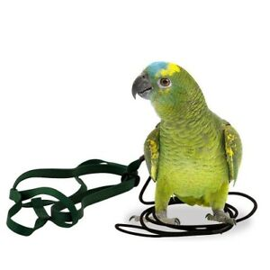 THE AVIATOR PARROT HARNESS & LEASH - SMALL - GREEN