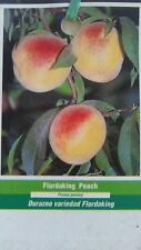 4'-5' FLORDAKING PEACH Tree Live Healthy Trees Fruit Garden Plant Home Peaches