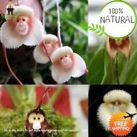 Orchid Japanese Monkey Seeds Plants Face Flower Garden Bonsai Rare Home 100pcs