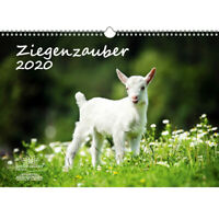 Ziegenzauber DIN A3 Kalender 2020 Ziegen und Zicklein - Seelenzauber