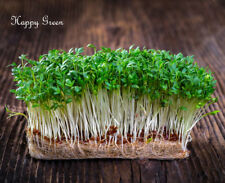 Sprouting seeds - CRESS seeds Sprouts - 11 000 seeds - 30 GRAMS
