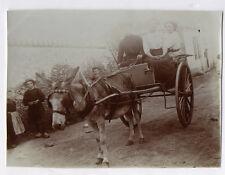 PHOTO ANCIENNE Voiture à cheval Attelage 3 Femmes Âne Transport Vers 1900