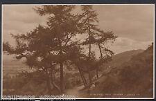 Worcestershire Postcard - A Hill Walk, Malvern   RT932
