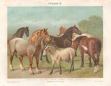 B6600 Tipi di Cavalli - Cromolitografia antica del 1890