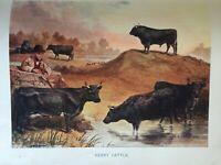 ANTIQUE PRINT C1910 KERRY CATTLE COW COWS IRELAND DAIRY FARMING DAIRY ART PRINT
