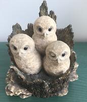 Border Fine Arts Tawny Owlets 081 3 Baby Tawny Owls Tree Stump Trunk Ray Ayres
