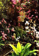 Mainau im Bodensee , Orchideenschau , Ansichtskarte