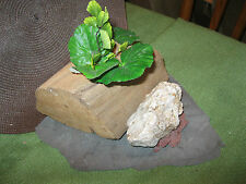 Aquarium Ornament Driftwood Log LG Terrarium Rock Iwagumi Aquascape Decor