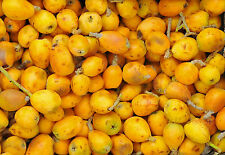 South African Marula Oil 50ml / Good For Damaged Skin