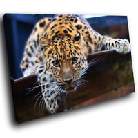 A100 Orange Tiger Cool White Funky Animal Canvas Wall Art Large Picture Prints
