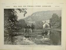 1903 Imprimé Vue de Boxhill Surrey Paysage Cygnes