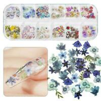 120pcs Of Nail Stickers And Nail Wood Pulp Pieces Maple Leaf Butterfly A3F5
