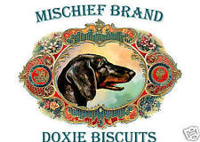Smooth Dachshund   Biscuit Tin & Cookies