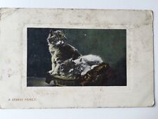 Vintage Postcard - Animals - Cats - Wildt & Kray #1262 - 1908 - COWHAM