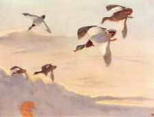 "MALLARD. ""Morning Flight"" by WINIFRED AUSTEN 1935 old vintage print picture"