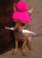 Chihuahua beanie hat in Hot Pink
