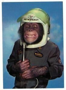 "CHIMPANZEE Dressed as An Astronaut VTG Color POSTCARD 4""x5.75"" QP-97"